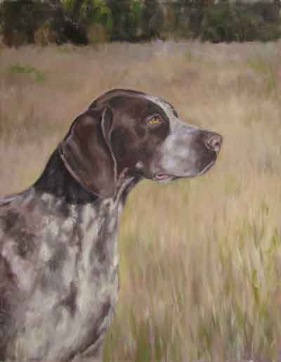 dog portrait german shorthaired pointed seth